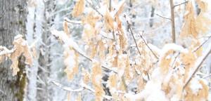 winterleaves